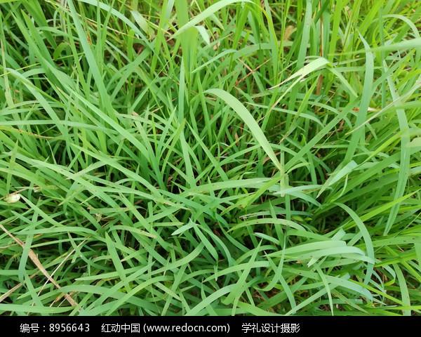 俯拍绿草地图片