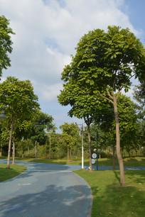 广州白云儿童公园绿道风景