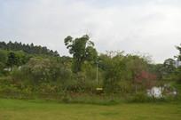 广州白云儿童公园绿化景色