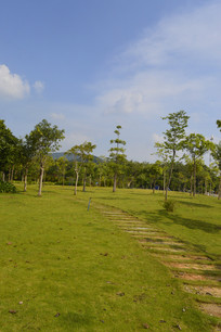 广州儿童公园草坪路树木