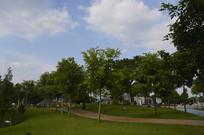 广州儿童公园风景树