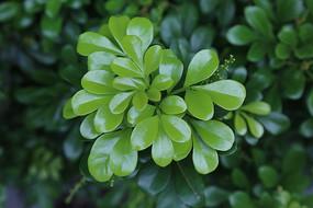 绿油油的植物叶子