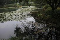 茅家埠荷塘与草丛