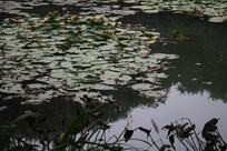 茅家埠荷塘与水草