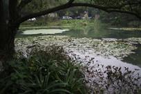 茅家埠荷塘与水草树木