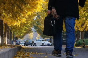 手拎公文包的男人走在银杏林下