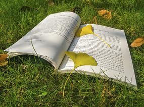书籍阳光生活