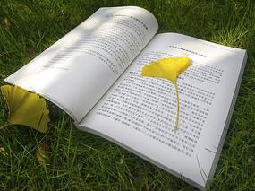 阳光草地书本