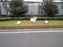 草坪上的玩偶绵羊