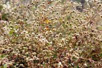 冬季野外不知名的花草