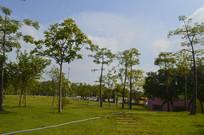 广州市儿童公园草地绿树绿化