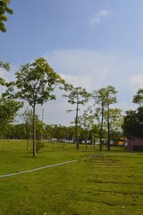 广州市儿童公园草坪绿化景观