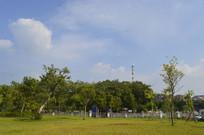 广州市儿童公园草坪绿树