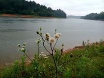 湖边的绿地