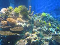 漂亮的珊瑚礁
