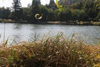 湘湖草丛与碧水