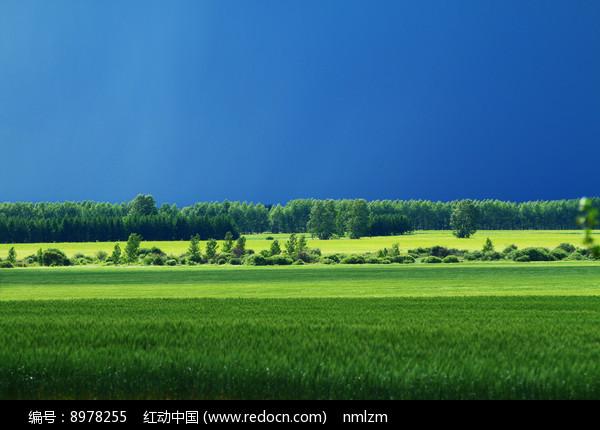 绿色的麦田风景图片