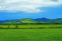 麦田、油菜花田风景