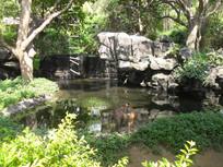 水池边的猴子