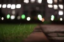 夜晚亮灯的教学楼前的青草