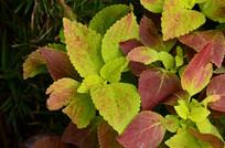 彩色斑斓的花草叶子