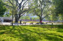 草地榕树风景