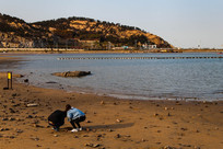 海边一对捡贝壳的情侣