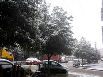 街边树木上的积雪