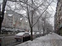 街道梧桐树下的积雪