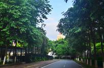 林中小路风景