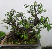 绿色盆栽图片素材