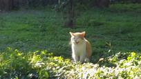 田园中的小花猫
