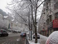 梧桐树上的积雪