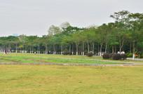 草坪绿树风景