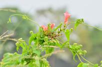 美丽的花草
