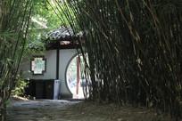 湘湖路边竹林与古风建筑