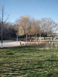 风中舞动的枝叶
