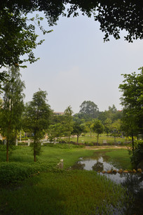 广州市儿童公园草坪绿树小溪