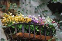 杭州小河直街窗台花草