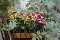 杭州小河直街窗台花草树叶