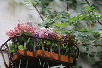 杭州小河直街窗台花草与树