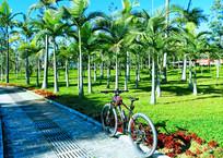 骑行穿过蓝天下的椰树林道