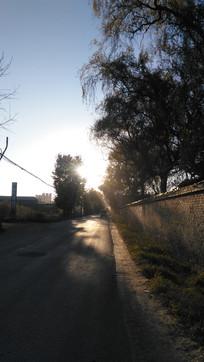 树木道路风景