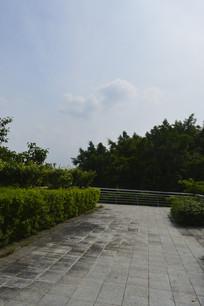 天架桥道路树木绿化景观