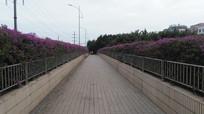 鲜花道路建筑图片