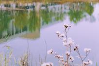 校园河边倒影河边花草