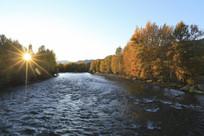 溪流河岸枫树林