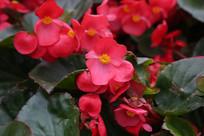 街头拍的小红花