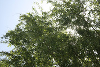 绿色的树枝