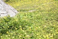 田野里的小花